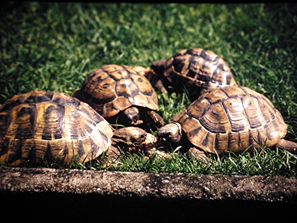 Gruppe verschiedener Schildkröten um 1975
