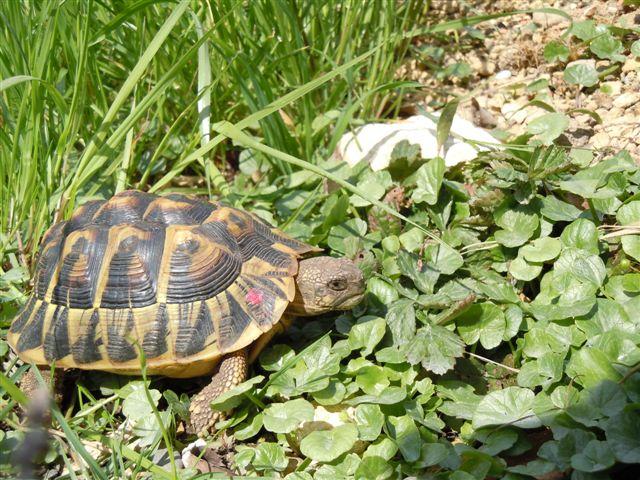 DSCN0916 10-jähriges Weibchen 0402