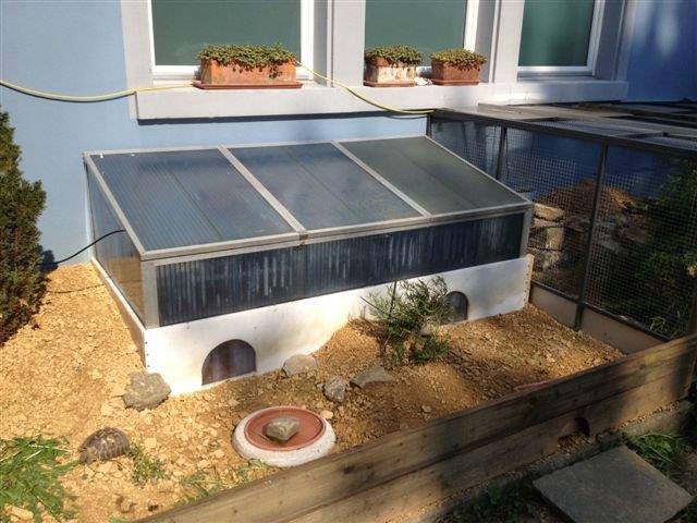 Schildkrötenhaus nach der Versetzung